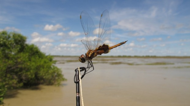 dragon fly territory guided fishing