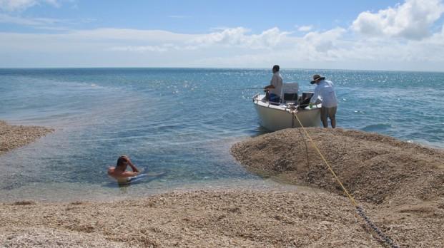 darwin fishing safari. vernon island barra charter